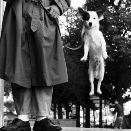 34 – Scrivere da cani. Passeggiata narrativa tra cacche e guinzagli